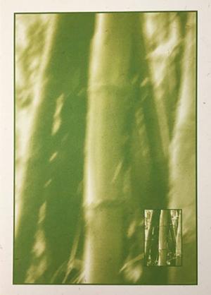 Bambuswald (Duplex grün)