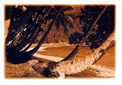 Palmen Sepia