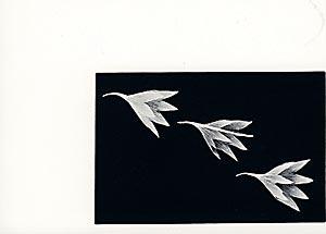 Susanne Schwalbach: Zugvögel